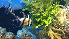 Aquarium, group of fish under the sea, fish knife stock footage