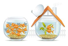 Aquarium home & social housing Royalty Free Stock Photography
