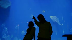 Aquarium in Hurghada, Egypt. Bewitching underwater world. Dark outlines of a young woman-mom and a little girl-daughter watching, admiring the beauty of the stock video footage