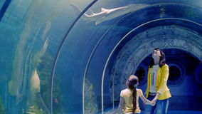 Aquarium in Hurghada, Egypt. Underwater tunnels, a fascinating underwater world and modern technology. stock video