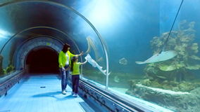 Aquarium in Hurghada, Egypt. Underwater tunnels, a fascinating underwater world and modern technology. stock footage