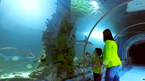 Aquarium in Hurghada, Egypt. Underwater tunnels, a fascinating underwater world and modern technology. A young brunette woman in a yellow jacket and jeans stock footage