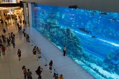 Aquarium inside Dubai Mall. Dubai, United Arab Emirates - October 16, 2014: People watching the huge aquarium inside Dubai Mall Stock Photo