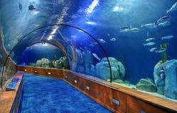 Glass tunnel in Oceanografic aquarium. In Valencia Spain royalty free stock images