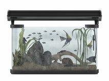 Aquarium isolated Stock Photography