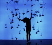 Aquarium with jellyfish in toronto Royalty Free Stock Photo