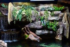 Terrarium for fish in Kuala Lumpur Aquarium royalty free stock photo