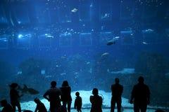 Aquarium, l'eau sous-marine et bleue photographie stock