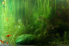 Aquarium landscape Royalty Free Stock Photo