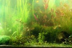 Aquarium landscape. Part of aquarium scene in natural lighting, not filtered Royalty Free Stock Photography