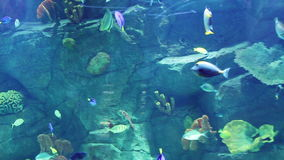 Aquarium with a large amount of tropical fish large and small stock footage