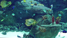 Aquarium with a large amount of tropical fish large and small stock video