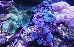 Aquarium-Leben Stockfoto
