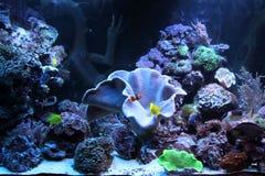 Aquarium life Stock Photo