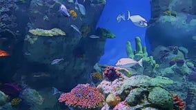 Aquarium life in cartoon form stock footage