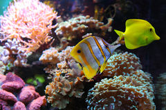 Aquarium life Royalty Free Stock Photo