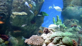 Aquarium life stock footage