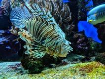 Aquarium life. Sealife in the Monte Carlo Aquarium royalty free stock image