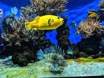 Aquarium life. Sealife in the Monte Carlo Aquarium royalty free stock photo