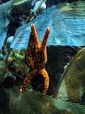 Aquarium life. Sealife in the Monte Carlo Aquarium royalty free stock photos