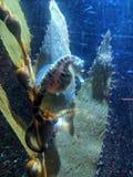 Aquarium life. Sealife in the Monte Carlo Aquarium stock photo