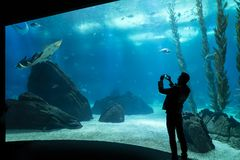 Aquarium in Lisbon. A man while photographs a fish in the aquarium of Lisbon, Portugal royalty free stock photography