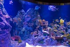 Aquarium in Loro Parque Stock Afbeelding