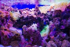 Aquarium in Loro Parque Royalty-vrije Stock Fotografie