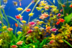 Aquarium with many colored fish royalty free stock photos