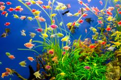 Aquarium with many colored fish stock photos