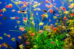 Aquarium with many colored fish stock images