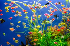 Aquarium with many colored fish royalty free stock photography