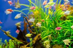 Aquarium with many colored fish royalty free stock photo
