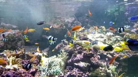 Aquarium with many different nice fish stock footage
