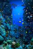 Aquarium with many varieties of corals and colorful marine fishes Stock Image
