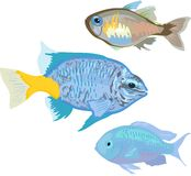 Aquarium marine fishes Royalty Free Stock Photos