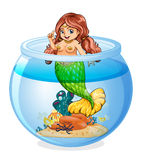 An aquarium with a mermaid Royalty Free Stock Image