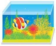 Aquarium met een tropische vis Royalty-vrije Stock Foto's