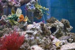 Aquarium met exotische vissen en koralen royalty-vrije stock foto's