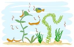 Aquarium met garnalen. Stock Foto's