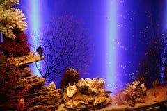 Aquarium met kleine vissen en koralen royalty-vrije stock afbeeldingen