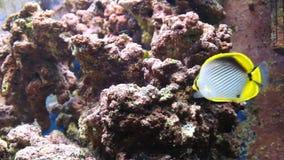 Aquarium met vissen stock video