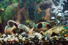 Aquarium mit alter Designregelung Stockfoto