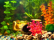 Aquarium mit Anlagen und Fischen Lizenzfreies Stockbild