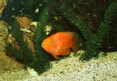 Aquarium mit Anlagen und Oberteilen Stockbilder