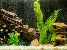 Aquarium mit ertrunkenem Schiff und Meerespflanzen Lizenzfreie Stockfotos
