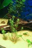 Aquarium mit etwas tropischen fisches stockfotos