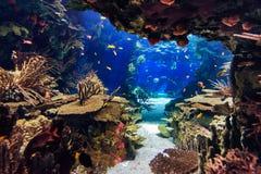 Aquarium mit Fischen, für Hintergrund Stockfotografie