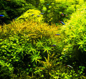 Aquarium mit Neon Lizenzfreies Stockbild