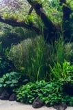 Aquarium mit Wasserpflanze und Tieren lizenzfreie stockfotos